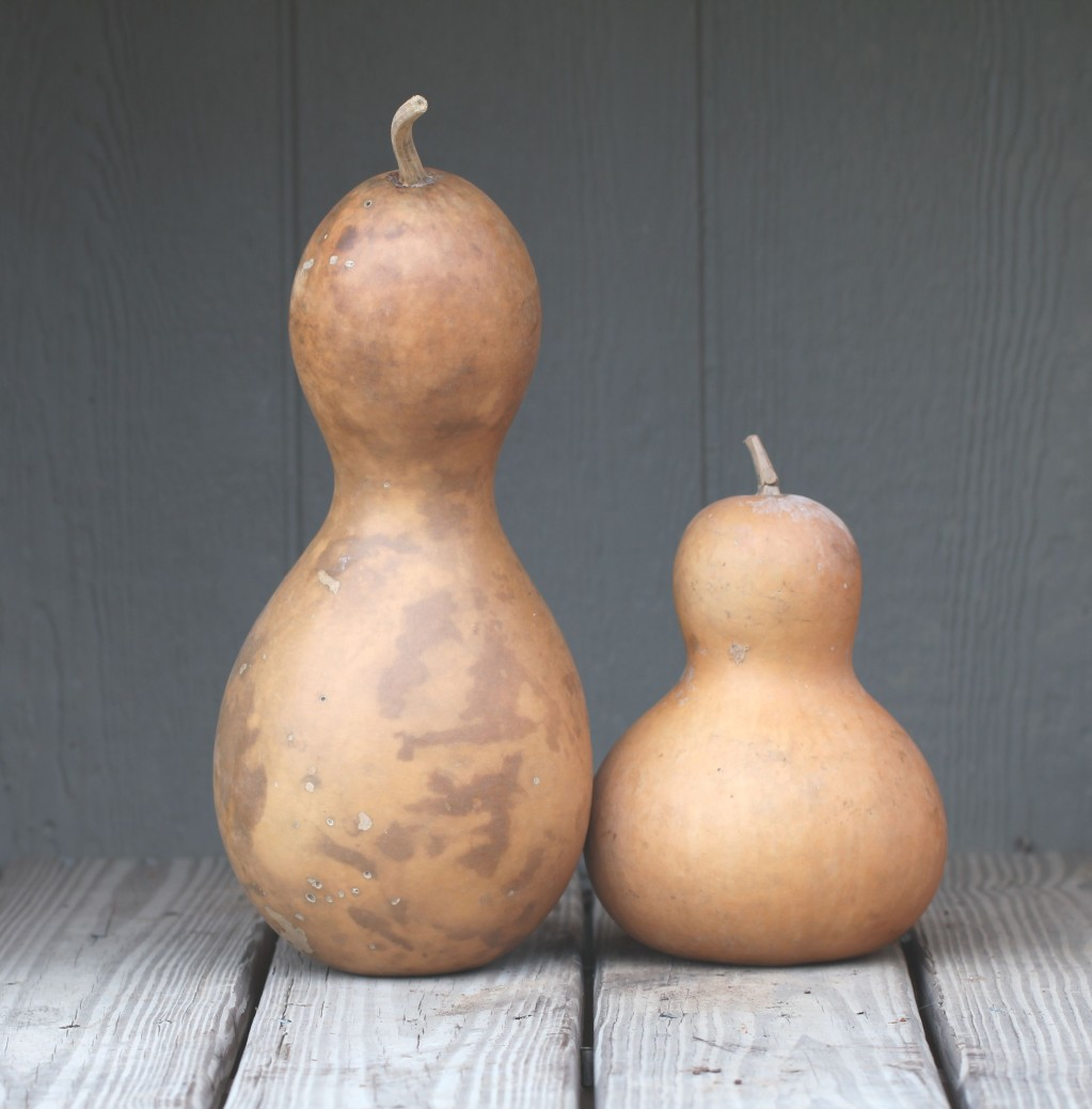 Bottle Gourds