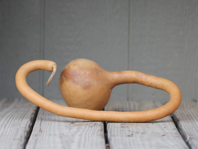 Long Handled Curvy Dipper Gourds