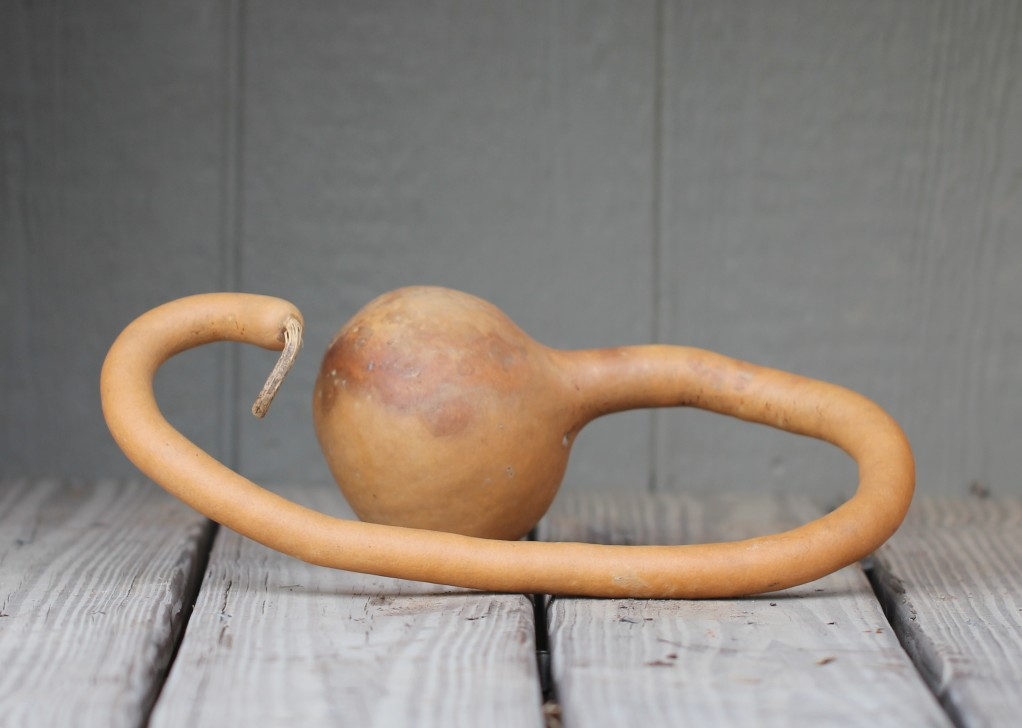 Curvy Dipper Gourd
