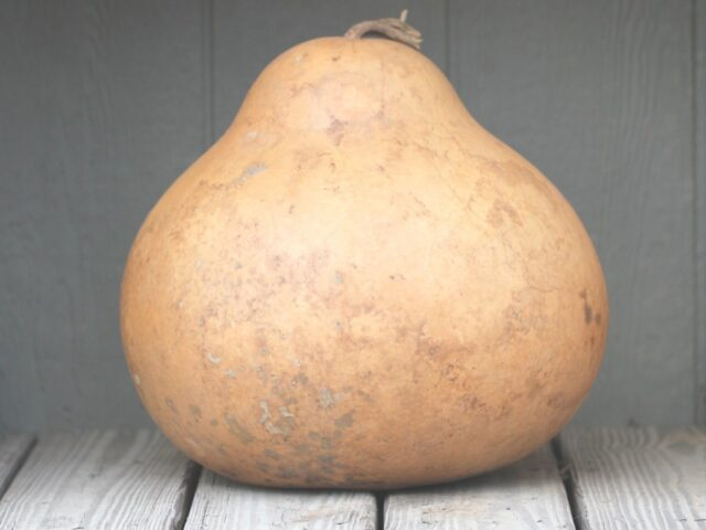 Kettle Gourds