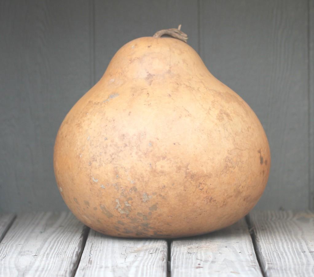 Kettle Gourd