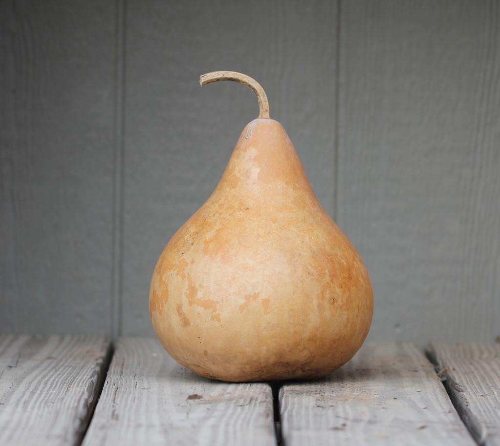 Martin Gourd