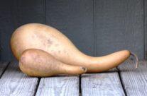 Penguin / Powderhorn Gourds