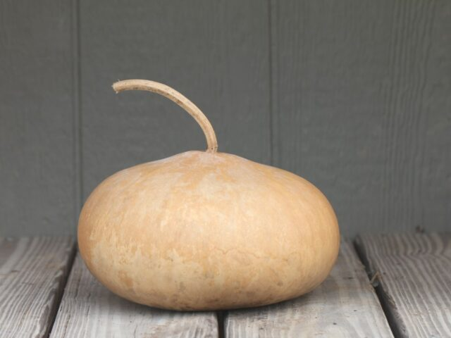 Tobacco Box Gourds