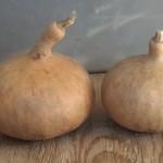 Mini kettle onions