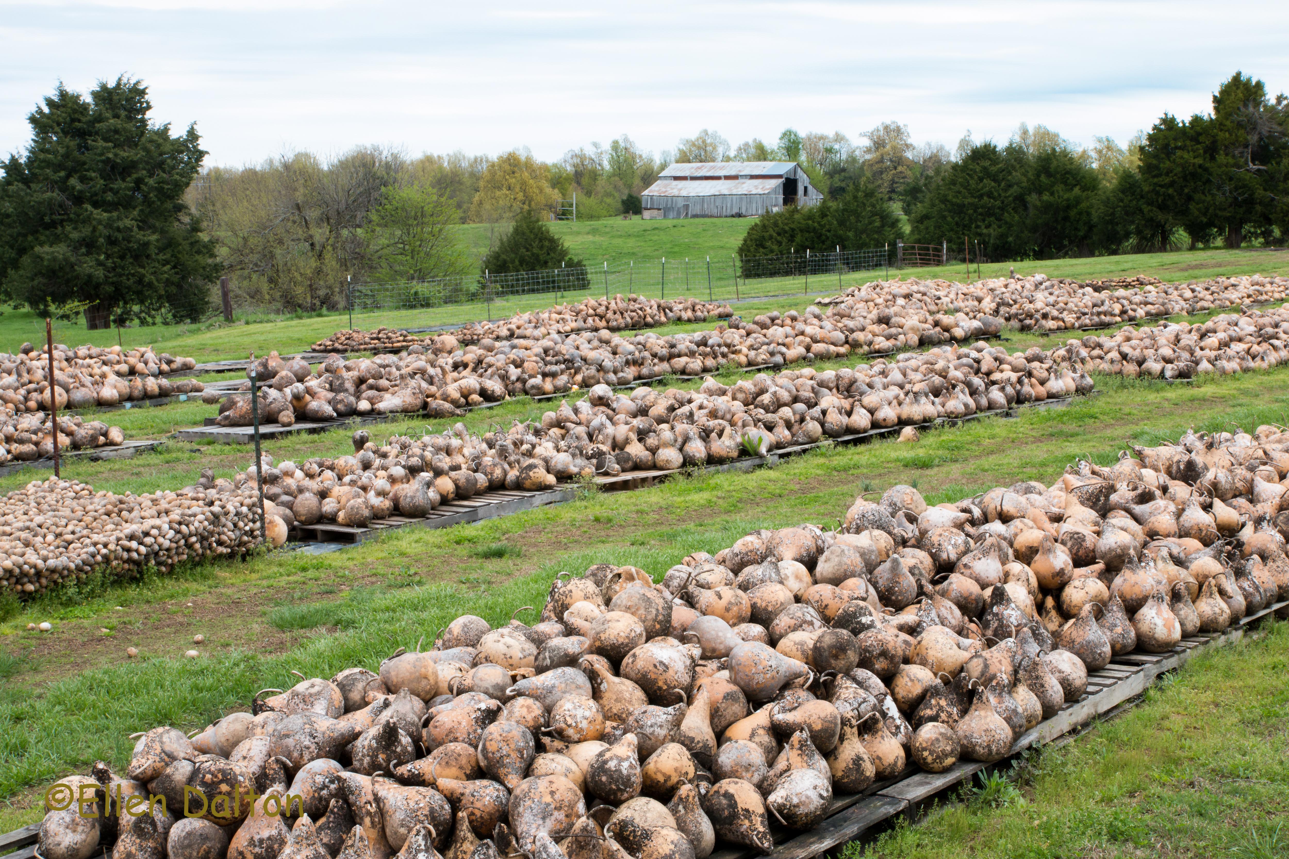 gourd yard (1 of 1)