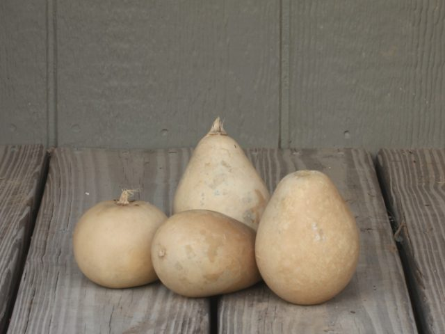 Assorted Ornamental Gourds