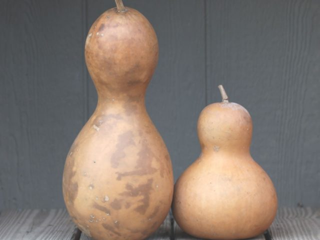 Miniature Bottle Gourds